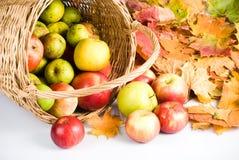 корзина яблока Стоковое Изображение