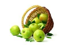 Корзина яблок на белой предпосылке Сочные зеленые яблоки с Стоковое Изображение