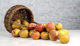 Корзина яблок разлитых на таблице Стоковые Изображения RF