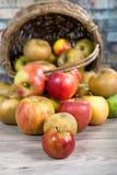Корзина яблок разлитых на таблице Стоковые Фото