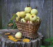 Корзина яблок Стоковая Фотография RF