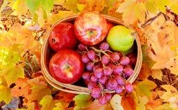 корзина яблок и виноградин на зеленой траве Стоковые Фотографии RF