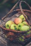 корзина яблок органическая Стоковое Изображение