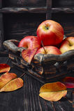 Корзина яблок осени Стоковые Изображения RF