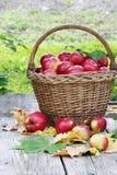 Корзина яблок Стоковые Изображения RF