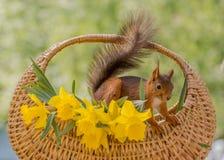 Корзина Daffodil Стоковые Изображения RF
