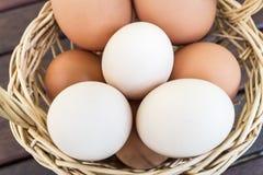 корзина eggs свежая Стоковые Изображения RF