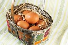 корзина eggs свежая Стоковые Изображения