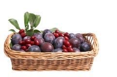 корзина fruits сочно стоковое изображение