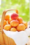 корзина fruits сочно стоковая фотография rf