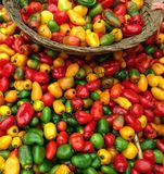 Корзина na górze красных, зеленых и желтых перцев стоковые фото