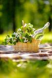 корзина outdoors picnic Стоковые Изображения