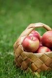 Корзина Wicker вполне торжественных яблок стоковое изображение