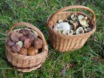 Корзины вполне грибов Стоковые Изображения RF
