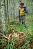 Корзины вполне различных видов грибов в лесе Стоковые Фото