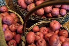 Корзины вполне малых красных новых картошек Стоковая Фотография