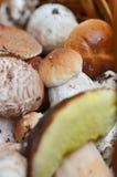 Корзины вполне различных грибов в лесе Стоковые Изображения RF