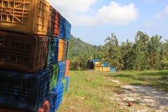Корзины в поле яблок Стоковая Фотография