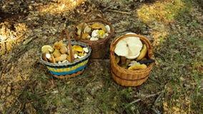 Корзины гриба деревянные Стоковое фото RF