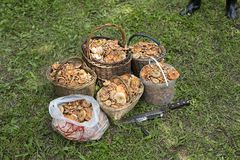 Корзины грибов на лужайке Стоковое Изображение RF