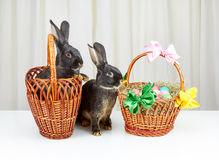 2 корзины и 2 кролика на белой предпосылке Стоковое Фото