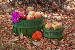 Корзины падения заполненные с яблоками Стоковое Изображение RF