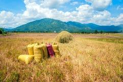 Корзины риса Стоковая Фотография RF