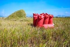 Корзины риса Стоковые Фотографии RF