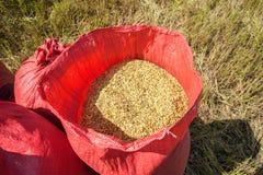 Корзины риса Стоковые Изображения
