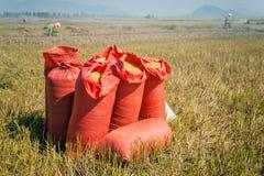 Корзины риса Стоковое Фото