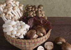 Корзины сортированных грибов Стоковая Фотография RF
