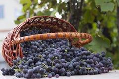 Корзины с виноградинами природы стоковое изображение