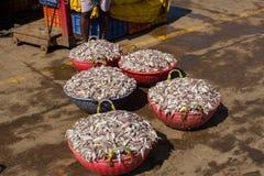 Корзины с рыбами усаживание девушки рыболовства шлюпки гаван Стоковое Фото