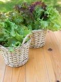 2 корзины с салатом салата Стоковая Фотография RF