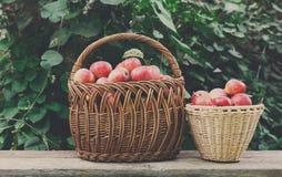 Корзины с сбором яблок в саде падения Стоковые Изображения