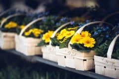 Корзины с цветками весны Стоковое Изображение RF