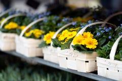 Корзины с цветками весны Стоковое Фото