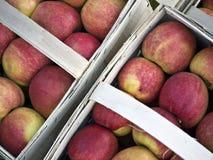 корзины 2 яблок Стоковое фото RF