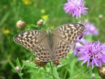 коричневая бабочка Стоковая Фотография RF