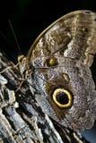 коричневая бабочка Стоковые Фото