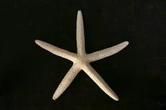 коричневая белизна starfish комода Стоковая Фотография