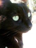 коричневая влюбленность иллюстрации сердца кота Стоковая Фотография