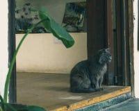 коричневая влюбленность иллюстрации сердца кота Стоковое Изображение RF