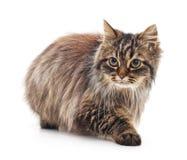 коричневая влюбленность иллюстрации сердца кота Стоковые Изображения
