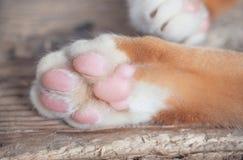 коричневая влюбленность иллюстрации сердца кота Стоковая Фотография RF
