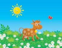 коричневая корова Стоковое фото RF