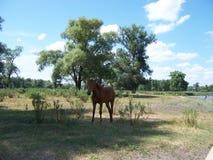 Коричневая лошадь стоит одной в тени деревьев на горячий горячий летн стоковое изображение rf