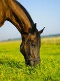коричневая лошадь травы поля еды Стоковые Фото