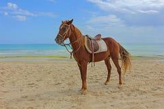 коричневая лошадь Стоковая Фотография RF