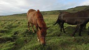 коричневая лошадь акции видеоматериалы